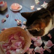 14 januari: Spelen met bloemblaadjes